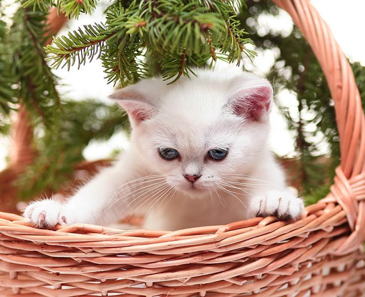 Стихами, новые картинки с котами и надписями
